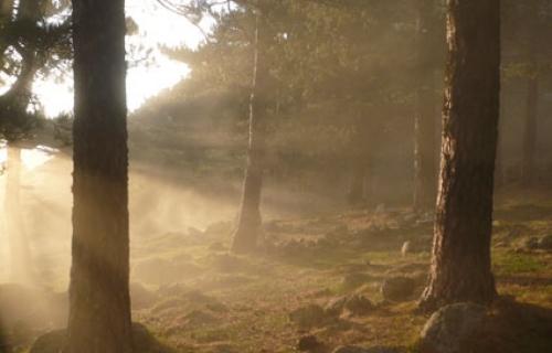 Wald_im_Nebel-134